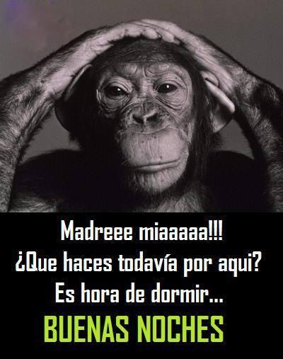 Taking A Selfie. on memes de monos para Memes Mexicanos Chistosos
